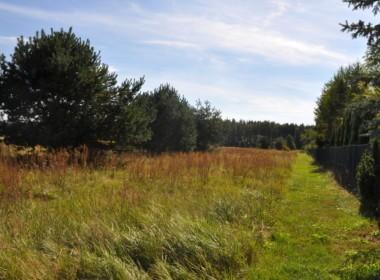 Działki przy lesie, SUPER CENA tylko 110 zł/m2