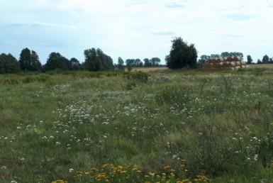 Bagna ziemia rolna 6,07 ha, warunki na siedlisko