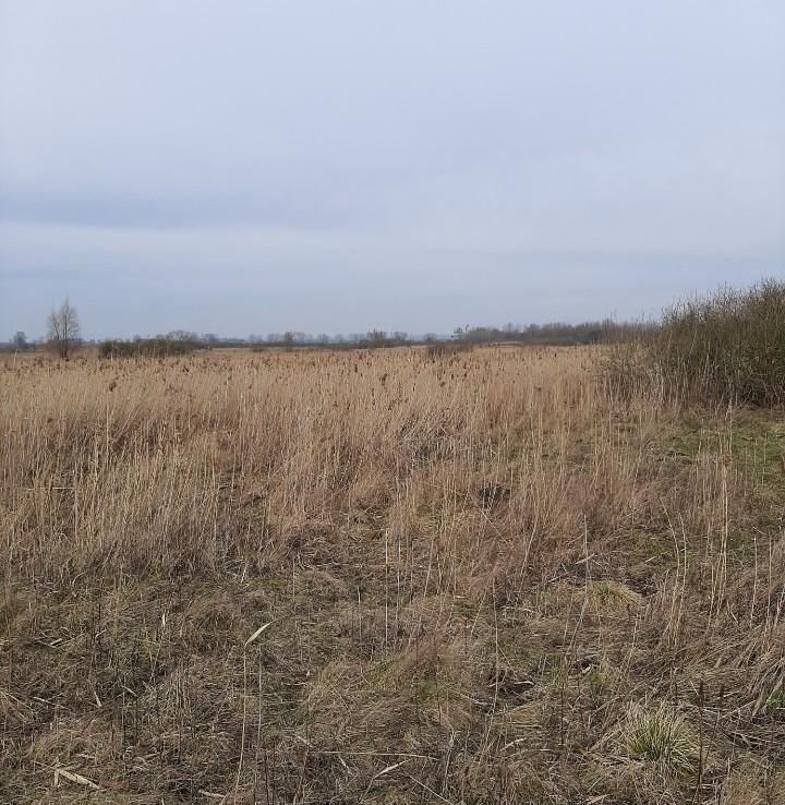 Działka Bielice 2,05 ha za 53 000 zł